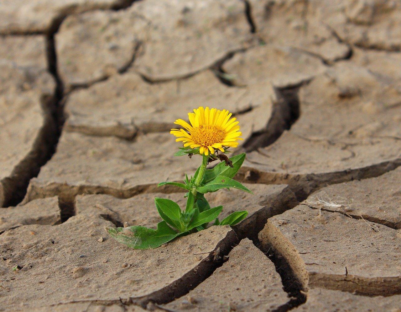 石に咲く花