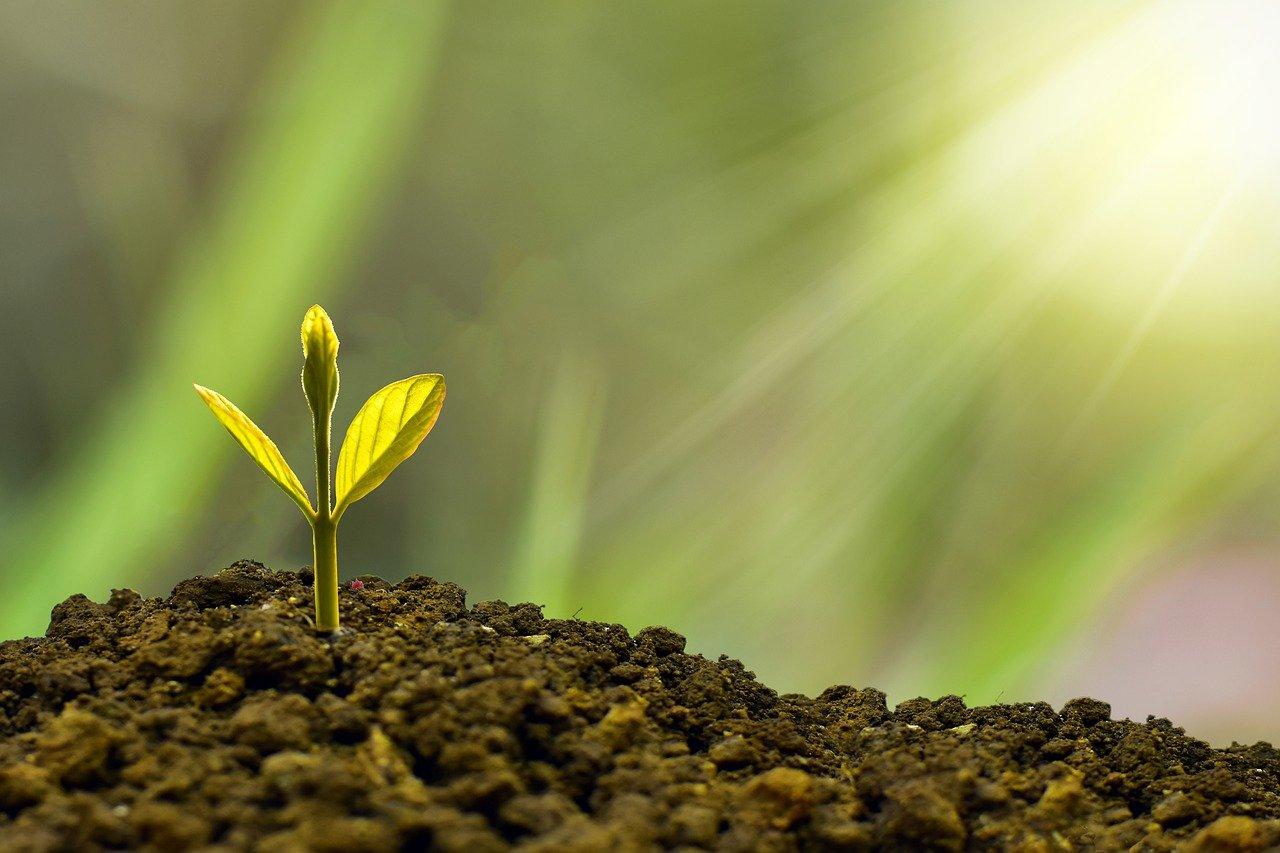 太陽の光を浴びて土の中から芽を出した植物